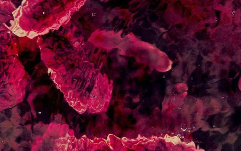 Salmonella vazuta la microscop